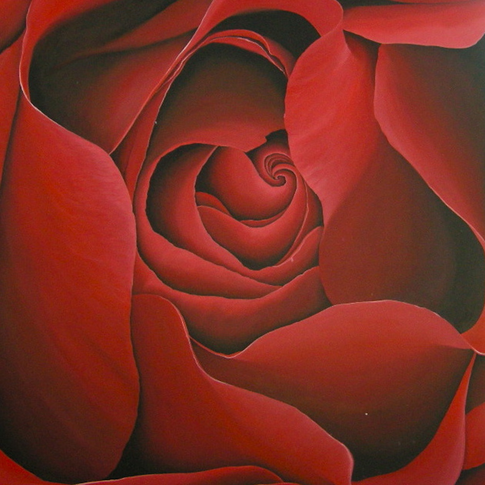 red-rose-for-eva-cystic-fybrosis-48x48-2010