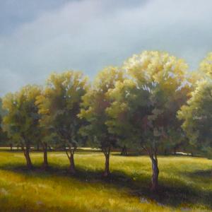 locust-trees